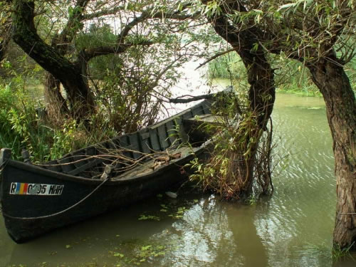 Danube Delta boat in the trees