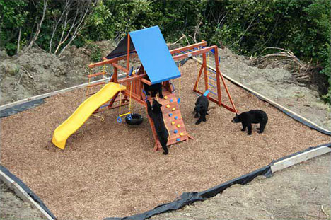 bear playground fun Kids Playground, Perfect For Bears to Have Some Fun