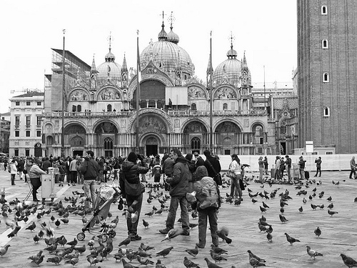 pigeons basilica di san marco venice Feeding Pigeons in Venice, Banned! Is it a Real Problem?