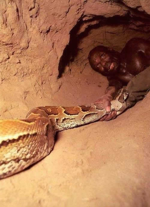 anaconda pictures eating