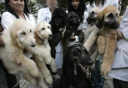 Puppies And Dogs Pictures. puppies through two dogs