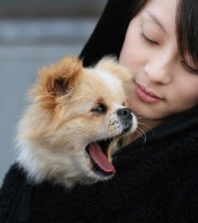 sunli2 Chinese Actress, Sun Li, Makes Plea to Care for Lost Animals