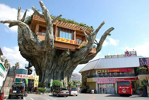 crazy banyan treehouse cafe in japan 1 Naha Harbor Diner   The Crazy Banyan Treehouse Cafe in Japan