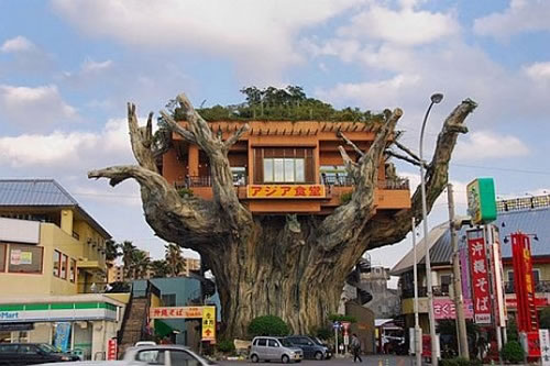 crazy banyan treehouse cafe in japan 2 Naha Harbor Diner   The Crazy Banyan Treehouse Cafe in Japan