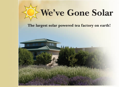largest solar powered tea factory Worlds Largest Solar Powered Tea Factory is in California