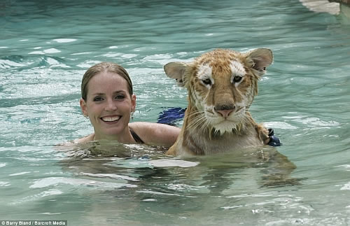 tiger swimming 2 Beauty and the Beast   Water Dancing