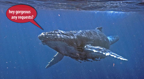 humpback whale singing Why Do Whales Sing? Underwater Serenades or Biological Sonar?