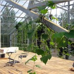 swedens naturhus nature house 6 150x150 Swedens Naturhus   House in a Greenhouse
