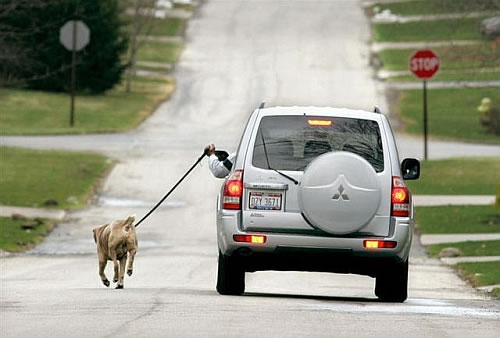dog walker Cars Make Us Fat: Active Transportation is the Way to Go