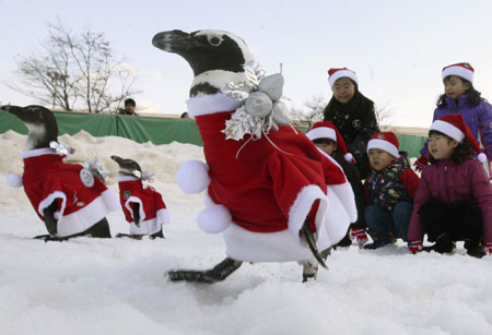 penguins dressed as santa claus Penguins in Santa Claus Outfits