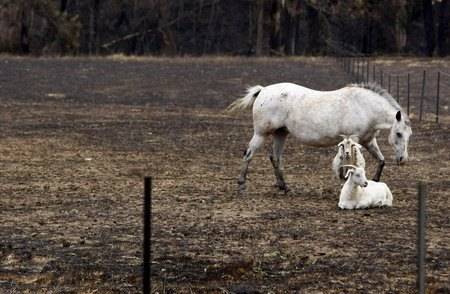 aussie animals1 Millions of Animals Dead in Australia Fires