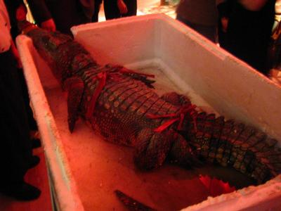 crocodile dinner Why Some Crocodiles are on the Endangered Species List