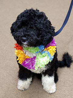 obamas dog bo Obamas to Get a Portuguese Water Dog, Named Bo
