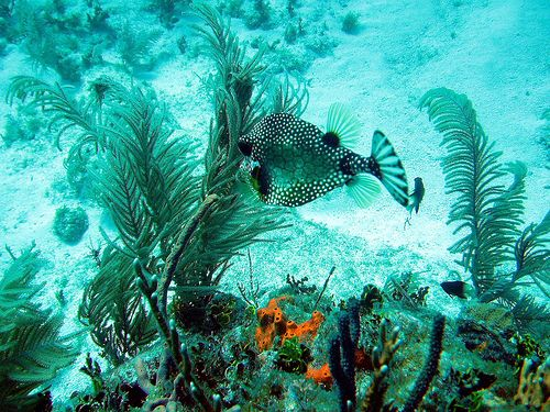 the french reef on key largo fl The Waning Extravaganza of Reefs in the Coral Triangle