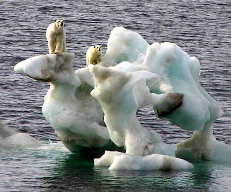 Canadian polar bears stranded on ice