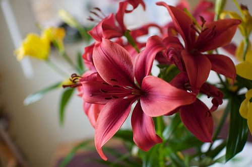 Indoor Flowers Houseplants Reduce Ozone Inside the Home