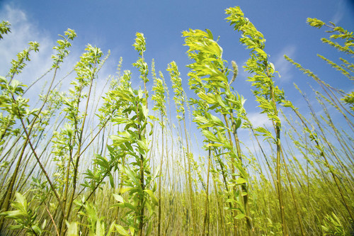 biomass Spain's Largest Biomass Plant Coming Up in Huelva