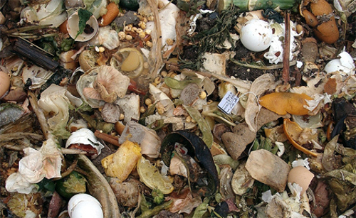 foodwasted1 America Wastes 2% of Energy on Uneaten Food!