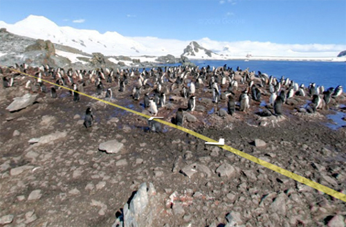street view antarctica Google Street View Updated with South America & Antarctica