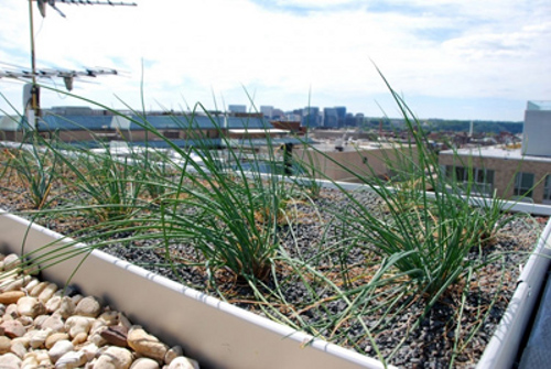 wwf green roof WWF's New Green Roof is a Sight to Behold
