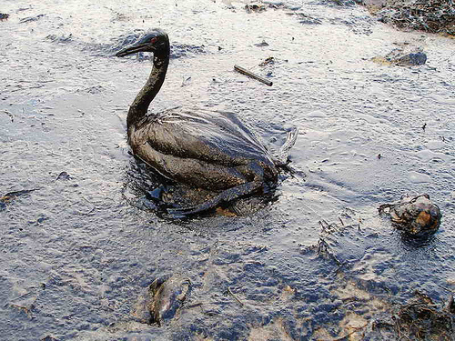 bp oil spill BP Oil Spill Tops Yahoo Search Requests in 2010