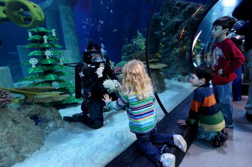 sealife Legoland Sea Life Aquarium to Have Eco Friendly Holiday Events