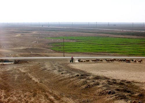 syria cotton crop desert Syrias Water Scarcity Park Set to Prove Life Can Be Lived Well with Less Water