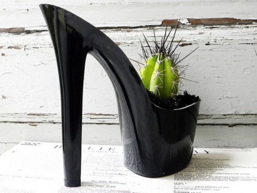 design Cacti Find New Home, Thanks to Rachel Mahlkes Designs