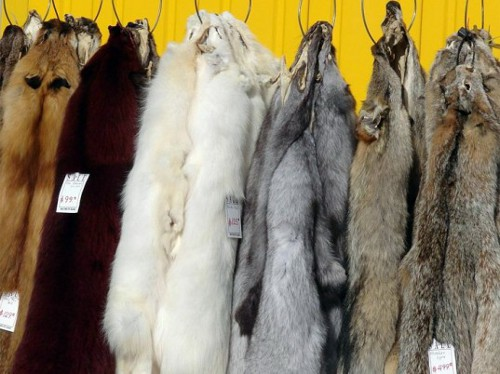 fur West Hollywood First US City to Ban Fur?
