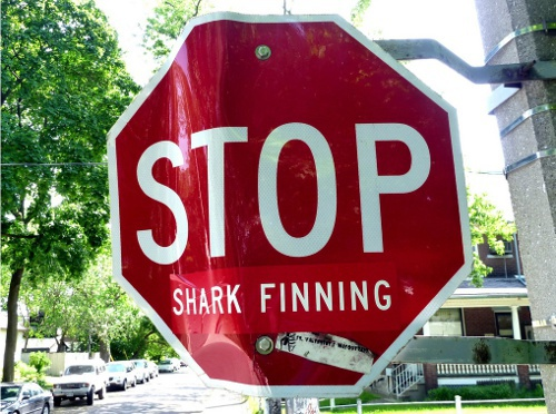 Toronto Bans Shark Fin Products Shark Fin Products Banned in Toronto