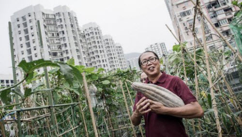 roof 0 Rooftop Farms Gaining Popularity in Hong Kong