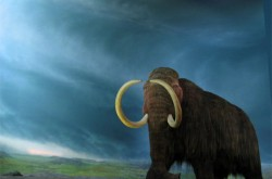 Woolly-Mammoth-