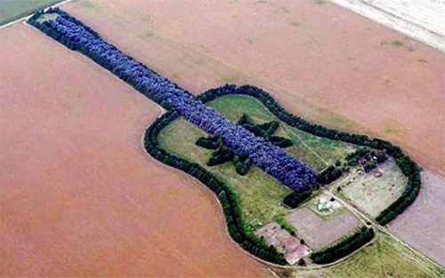 giutar Argentine Plants Guitar Shaped Forest in Memory of Late Wife