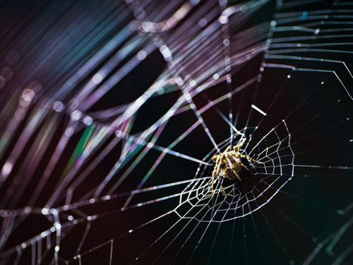 spidersilk Spider Silk Can Produce Biodegradable Computer Chips