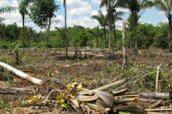 amazon-deforestation-592x444
