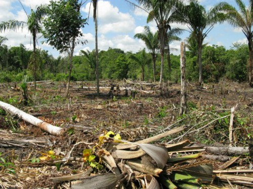 amazon deforestation 592x444 Brazil to Stop Illegal Logging in Amazon Forests with Tracking Devices
