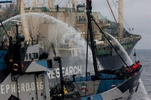 sea shepherd 300x199 Japan Suspends Whaling in Southern Ocean