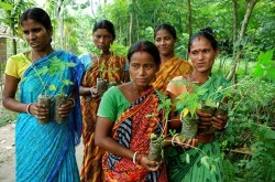 Women-with-saplings-West-Bengal-India