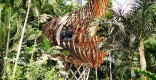 Biodiversity Treehouse Eden Project