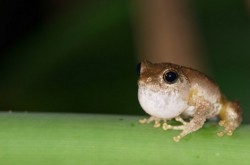 Rainforest.Frog