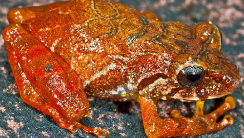 frog Frog Named after Film Maker James Cameron