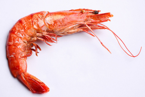 shrimp Indonesia to Boost Shrimp Farming with Eco friendly Technology