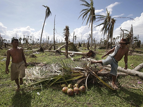 Coconut farms destroyed in Philippines Climate Change To Push Another 50 Million Towards Hunger By 2050