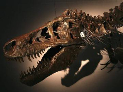 Dino Humanity May Suffer the Catastrophe of Cretaceous Era