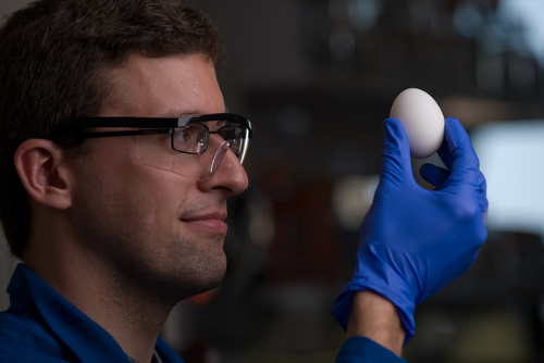 egg Scientists Unboil Boiled Egg; New Process Could Help Save Lives