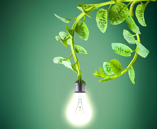 power from plants Power From the Green World; Dutch Company Generates Electricity from Plants