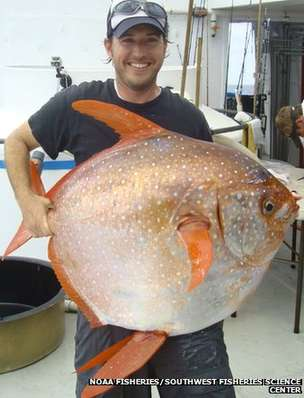 Opah Scientists Discover Warm blooded Fish