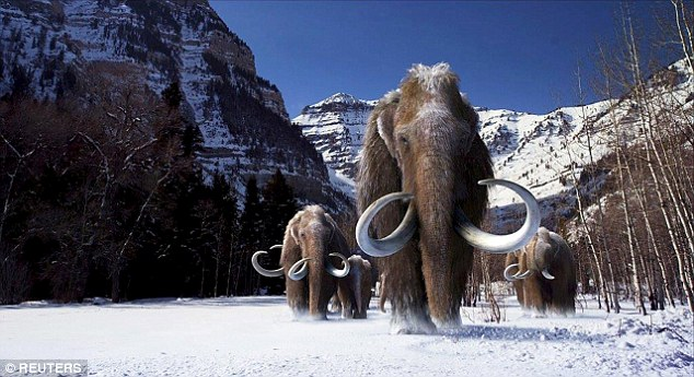 mammoth Will Wooly Mammoths Saunter Back to Life?