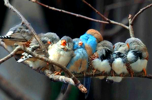 bird Scientists Reveal New Family Hierarchy for Birds