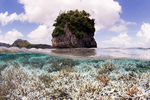 coral e1444480791417 Coral Bleaching on the Rise Across the Globe